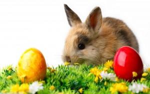 7021876-rabbit-easter-eggs