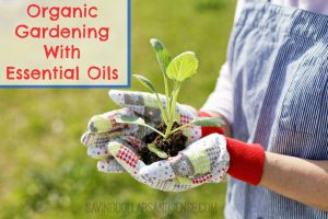 Organic-Gardening-with-Essential-Oils